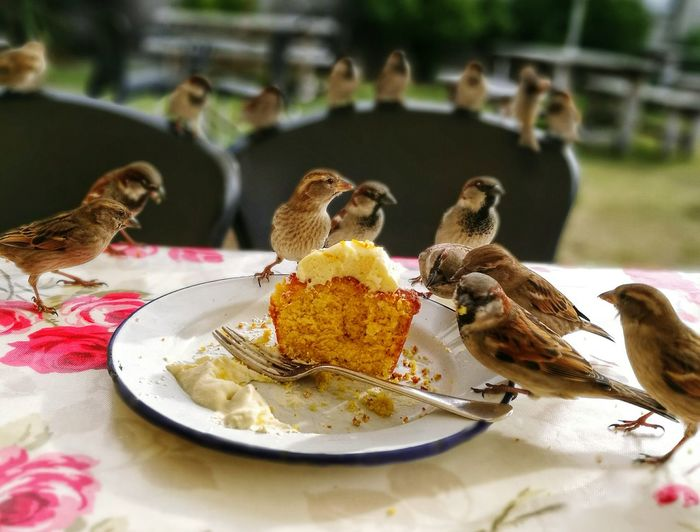 Sparrows Eating Cake In Plate On Table At Cafe