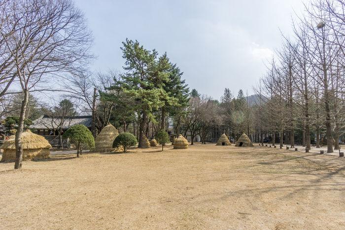 Korea Nami Island Seoul Bare Tree Blue Sky Cottage Day Naminara Outdoors Park Tent Tree