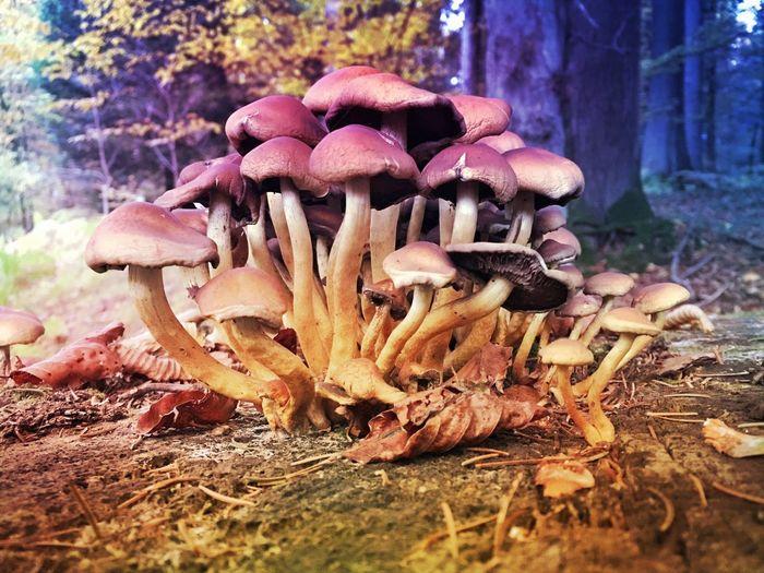 Magic mushrooms Mushrooms Mexturesapp EyeEmSwiss EyeEm Nature Lover Naturelovers Nature_collection Streamzoofamily Forest