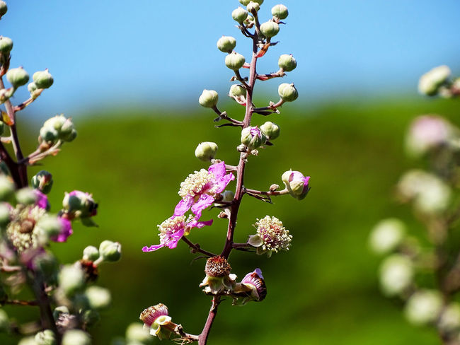 Uncultivated Flower Flower Head Branch Close-up Plant Plant Life In Bloom Botany Blossom