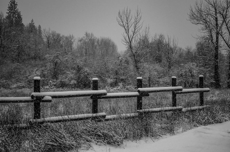 winter Winter Snow Snowing Fence Snow Covered Fence Posts Snow Covered Fence Cold Freezing Weather Winter Wonder Land Outdoors No People Sky Tree Day