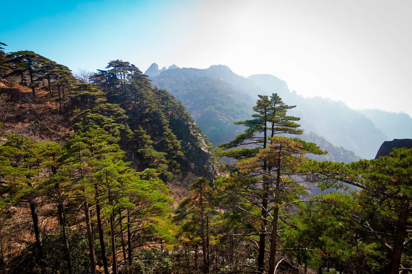 Mount Huangshan Beauty In Nature China Clear Sky Mountain Nature No People Outdoors