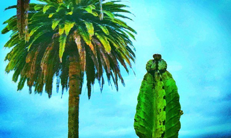 Cactus Cactusporn Cactusclub I Love Cactus Cacti EyeEm Cactus Palm Trees