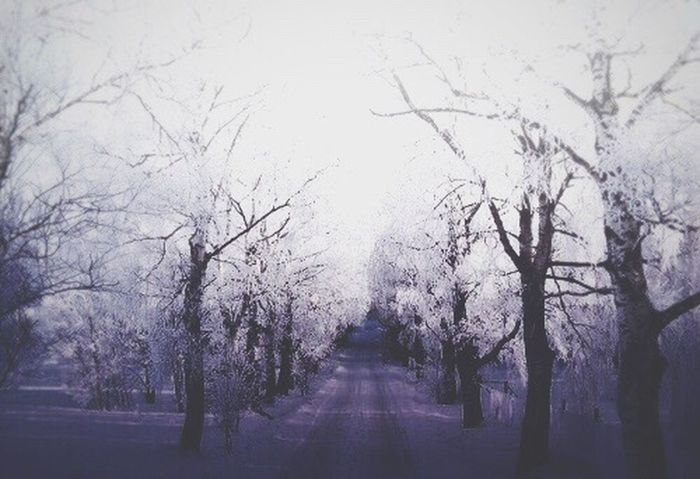 Montage Photography Tranquility Tree Nature No People Branch Outdoors Tranquil Scene Winter Inspirations Snowing Purple Blue