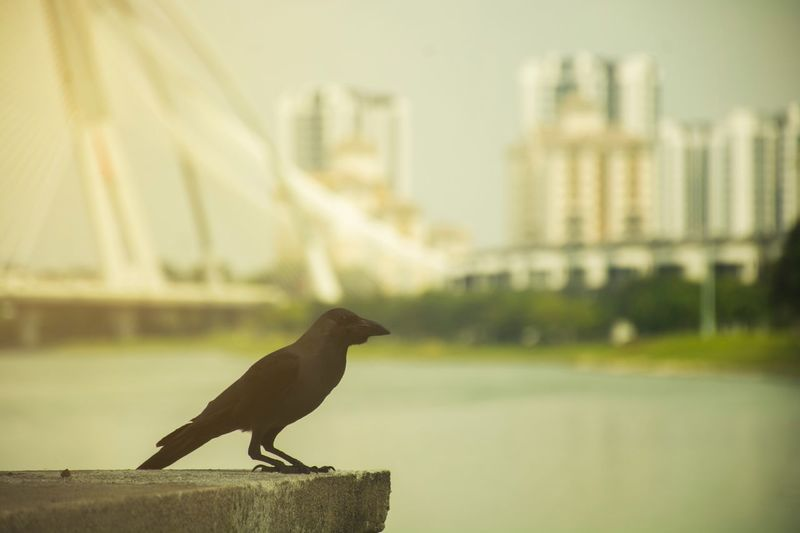 Built Structure Architecture Focus On Foreground One Animal Building Exterior Animal Themes No People Outdoors Animals In The Wild Bird Perching Animal Wildlife Day Nature Water Close-up City Sky