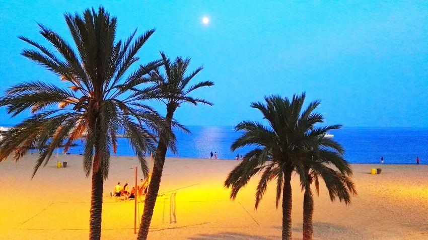 My City My Running View Taking Photos Barcelonalove Enjoying Life Urban Landscape Palm Trees On The Beach Moon Thebcnpost