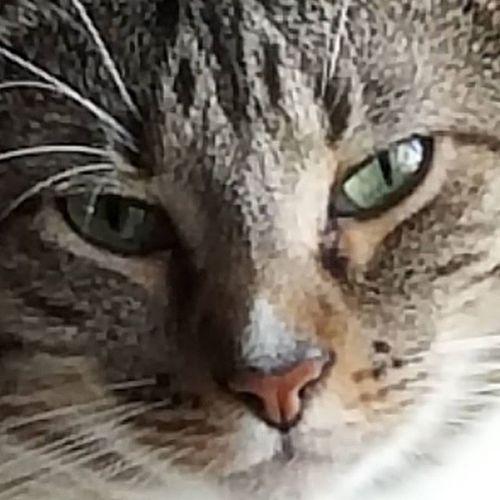 Mama's boy malloe Furry Catlover Myfurson Catsinboxes CoC Adorable Catlover Follow4follow Like4like Nofilter Babies Love Mykid Instagood Instacat Tabby TabbyCat Pictureoftheday Florida Felines Green Greeneyes