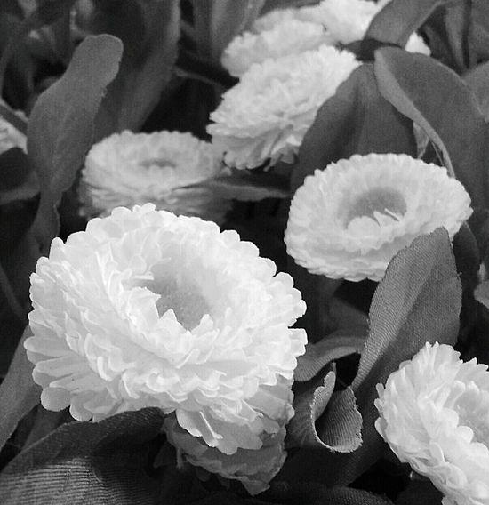 Mobile Photography Samsunggalaxycore Dedo Rich Fleurs