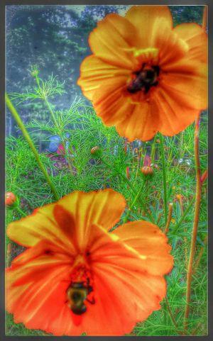 Gramoms Garden My Back Yard Home Sweet Home Showcase: November