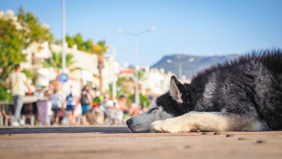 Relaxed dog Turkey Travel Destinations Street Domestic Pets One Animal Domestic Animals Mammal Animal Themes Animal Dog Canine Relaxation Incidental People Day Sky Selective Focus Sunlight Animal Body Part The Traveler - 2018 EyeEm Awards