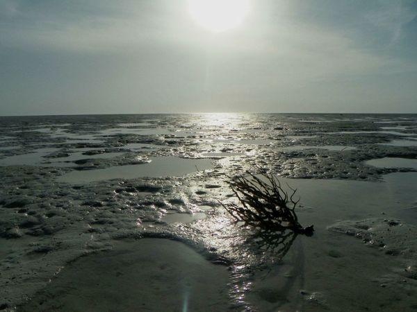 Holbox Beach EyeEm Best Shots Nature First Eyeem Photo Relaxing Mexico Rgaeta EyeEm Nature Lover
