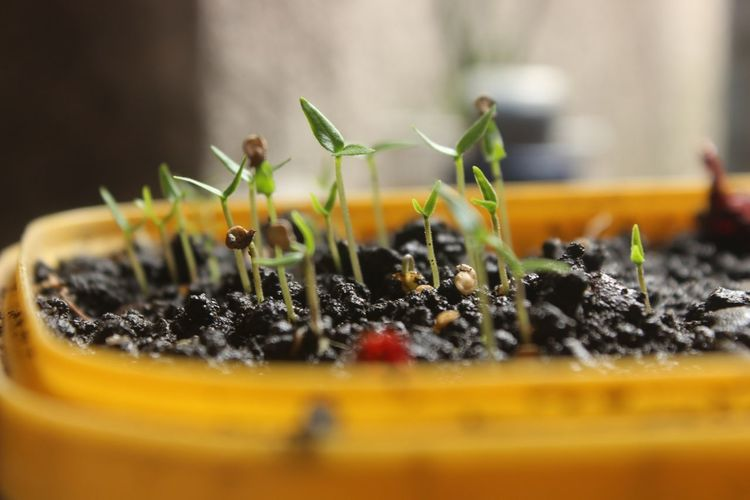 Close-Up Of Potted Seedlings