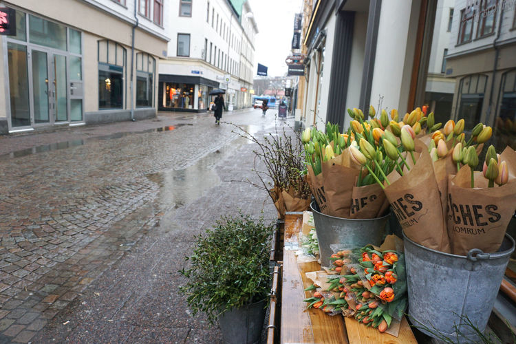 a rainy day in Gothenburg Tulip Tulips Spring Spring Flowers City Empty Road Rain Flower Window Box Retail  Store City Potted Plant Architecture Building Exterior Plant Built Structure Flower Shop Flower Head Price Tag For Sale Florist Flower Pot Blooming Display Stall In Bloom Petal Bunch Of Flowers Flower Arrangement