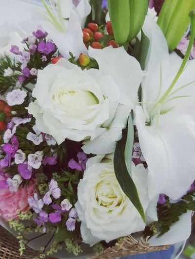 white rose~
