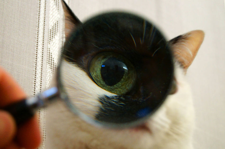 Animal Themes Black And White Cat Black And White Photography Cat Cat Eye Cat Eyes Closed Cat Face Cat Face Macro Close-up Day Domestic Animals Eye Feline Gato Gatto Indoors  Lola Mammal My Cat No People One Animal Pets Rossano Grimoldi Super Cat