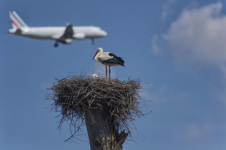 Low angle view of bird in nest against sky