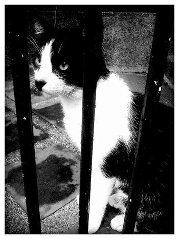 EyeEm Best Shots - Black + White cats