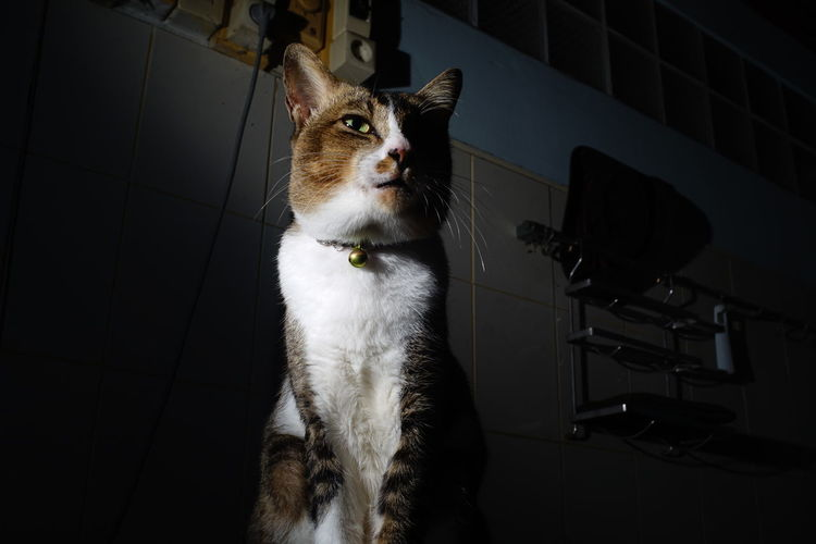 Cat looking away while standing on floor at home
