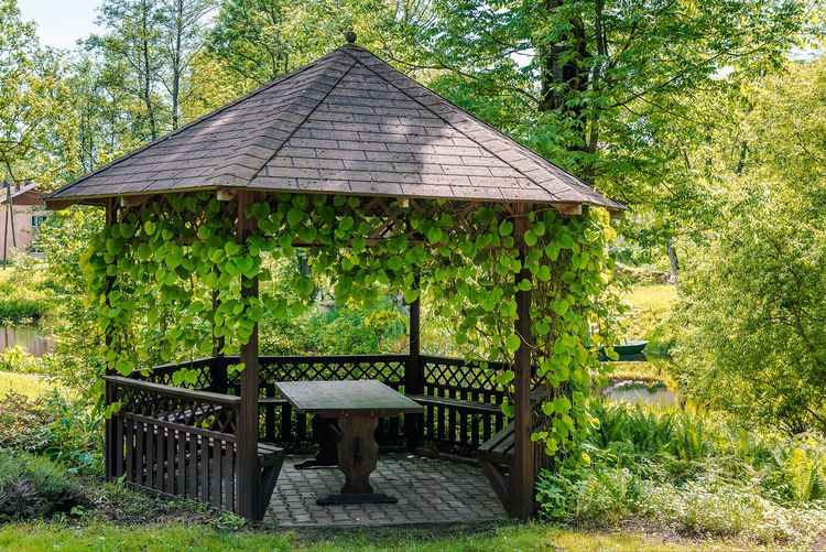 Wooden gazebo over summer landscape arbour Arbor Arbour Beauty In Nature Forest Gazebo Green Leaves Ivy Ivy Leaves Lake Lakeshore Lakeside Latvia Lush Foliage Nature Nobody Outdoors Park Pavilion Pergola Riga Summer Summerhouse Summertime Sunny Day Table And Bench