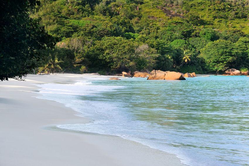 Beach Anse Lazio on Praslin, Seychelles Africa Beach Beauty In Nature Calm Coastline Day Exotic Island Landscape Nature Non-urban Scene Ocean Outdoors Palm Place Remote Sand Scenic Sea Shore Solitude Tranquility Travel Tropical Water