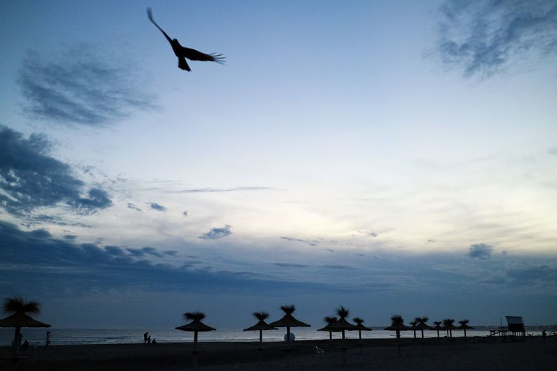 Sky Animal Themes Flying Cloud - Sky Animal Vertebrate Bird Animal Wildlife Animals In The Wild Silhouette One Animal Low Angle View Nature Mid-air Beauty In Nature Spread Wings Sunset Outdoors No People Scenics - Nature