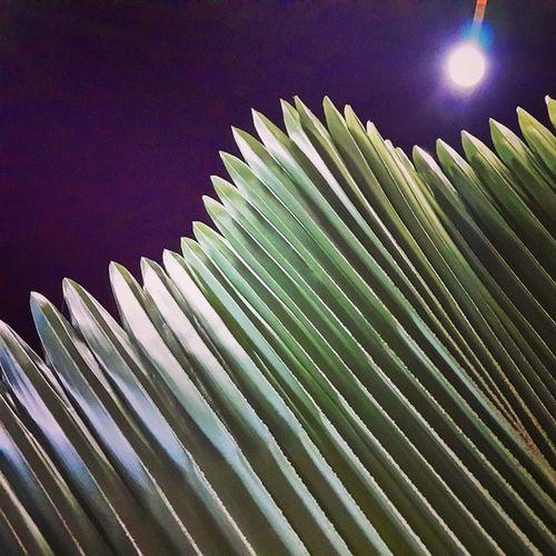 Night Lights Tree Leaf exposure mayfair