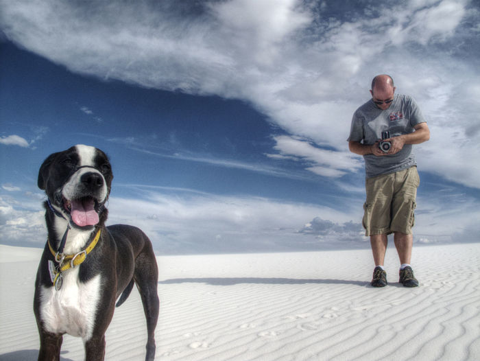 The boys on a perfect day at White Sands National Monument in New Mexico, Adventure Buddies Dogs On EyeEm Hobee Travels Hassleblad Travel Photography Travel Adventure Dogs New Mexico Outdoors White Sands National Monument Dogs Of EyeEm