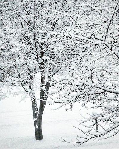 Letitsnow Snow Snowfall Winterwonderland Beautiful Love Wisconsin Eauclaire EC Ecwi