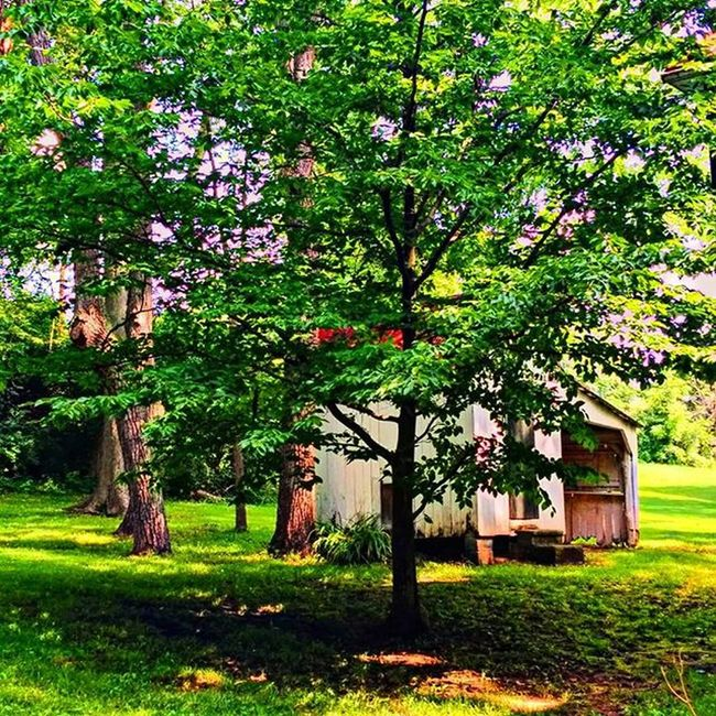 Berryville Cottage Rosemont Virginia