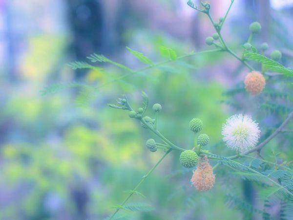 Showcase March EyeEm Nature Lover Dreamfantasy Bokeh Bokeheffect Takumar Airy Airy Flowers