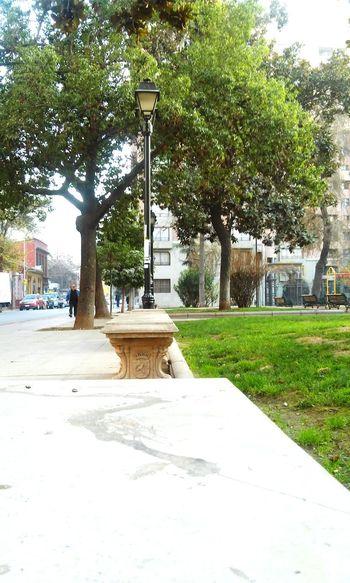 En las calles de santiago. En algun lugar🌳 In some place... Green Santiago De Chile Santiago Chile Arboles , Naturaleza Beautiful Simple Someplace