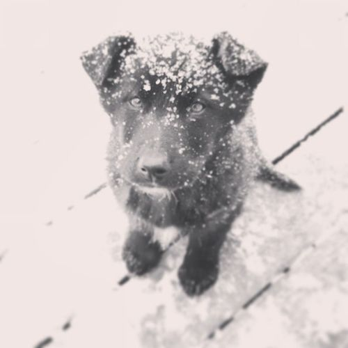 ^-^ puppy!! Puppy Blackpuppy Appreciatethelittlethingsinlife Winter snowy iowa YaDigBroChaCho