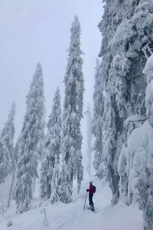 winter wonderland Winter Wonderland Winter Skitourengeher Skiing Skitouring Snow Winter Cold Temperature Tree Plant Mountain Winter Sport Sport Ski Holiday Lifestyles