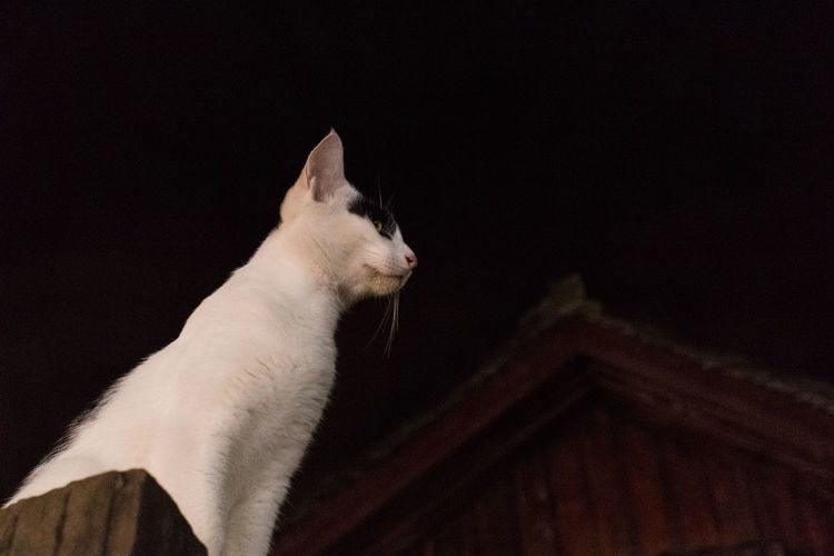 Animal Themes Cat Domestic Animals Domestic Cat Low Angle View Night One Animal Pets