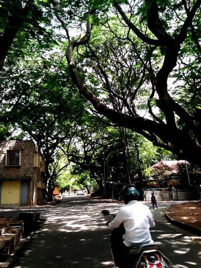Rear View Tree