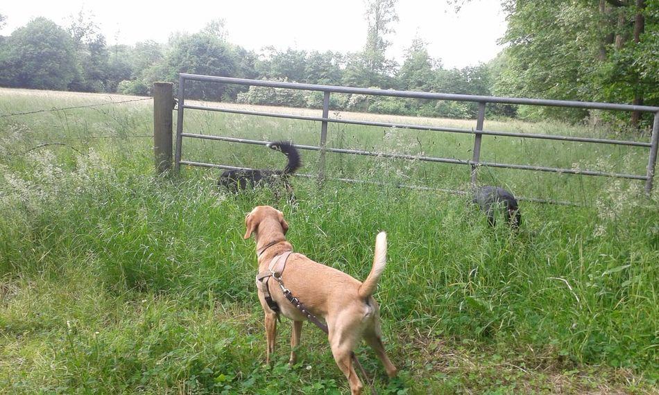 Hunderunde Freya Mit Rocky und henry Dog❤ Hunde Liebe ♡ Go For A Walk Dog Life