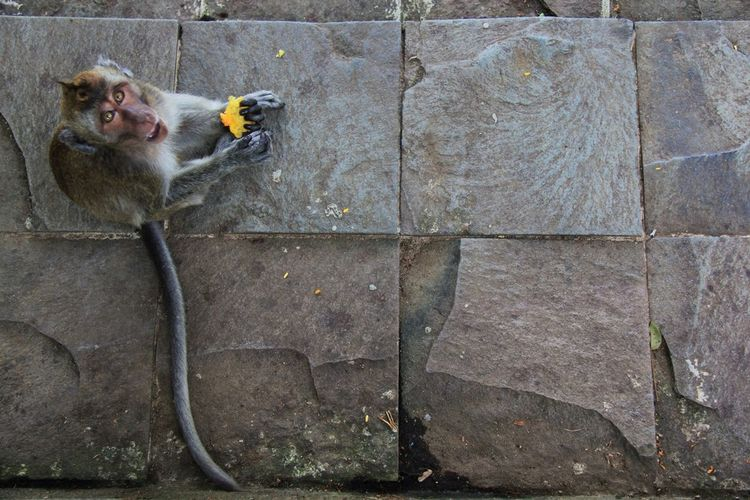 High angle portrait of monkey sitting on stone tile floor