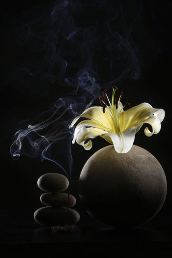 yellow lily on the round vase with black background Flower Flowering Plant Freshness Plant Close-up Lily Lily Flower Floral Petal Nature Summer Blossom White Spring Decoration Color Flora Blooming Bright Bouquet Leaf Green Bud Single Object Pretty Elégance Indoors  Table No People Still Life Flower Head Black Background Fragility Smoke Aroma Aromatherapy Vulnerability  Studio Shot Smoke - Physical Structure Yellow