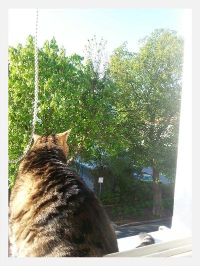 it loves the Summer ☀ Spring? Spring Cat♡