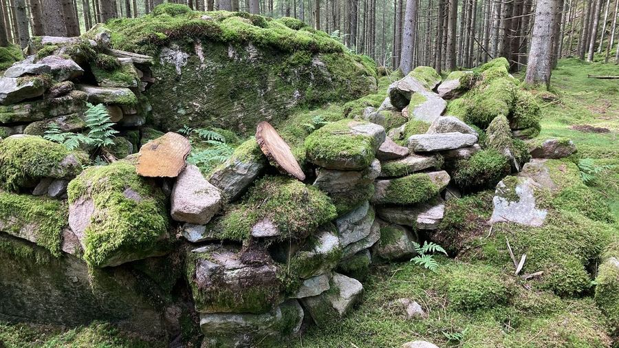 Stack of rocks on field in forest