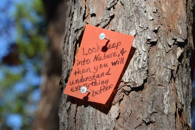 Close-up of sign on tree trunk