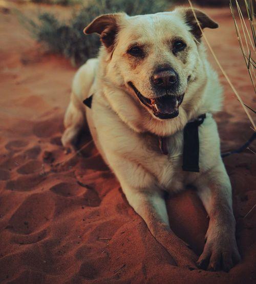 Close-up portrait of dog sitting on land