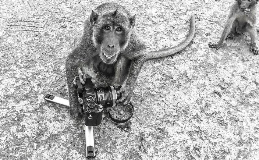 High angle portrait of a monkey