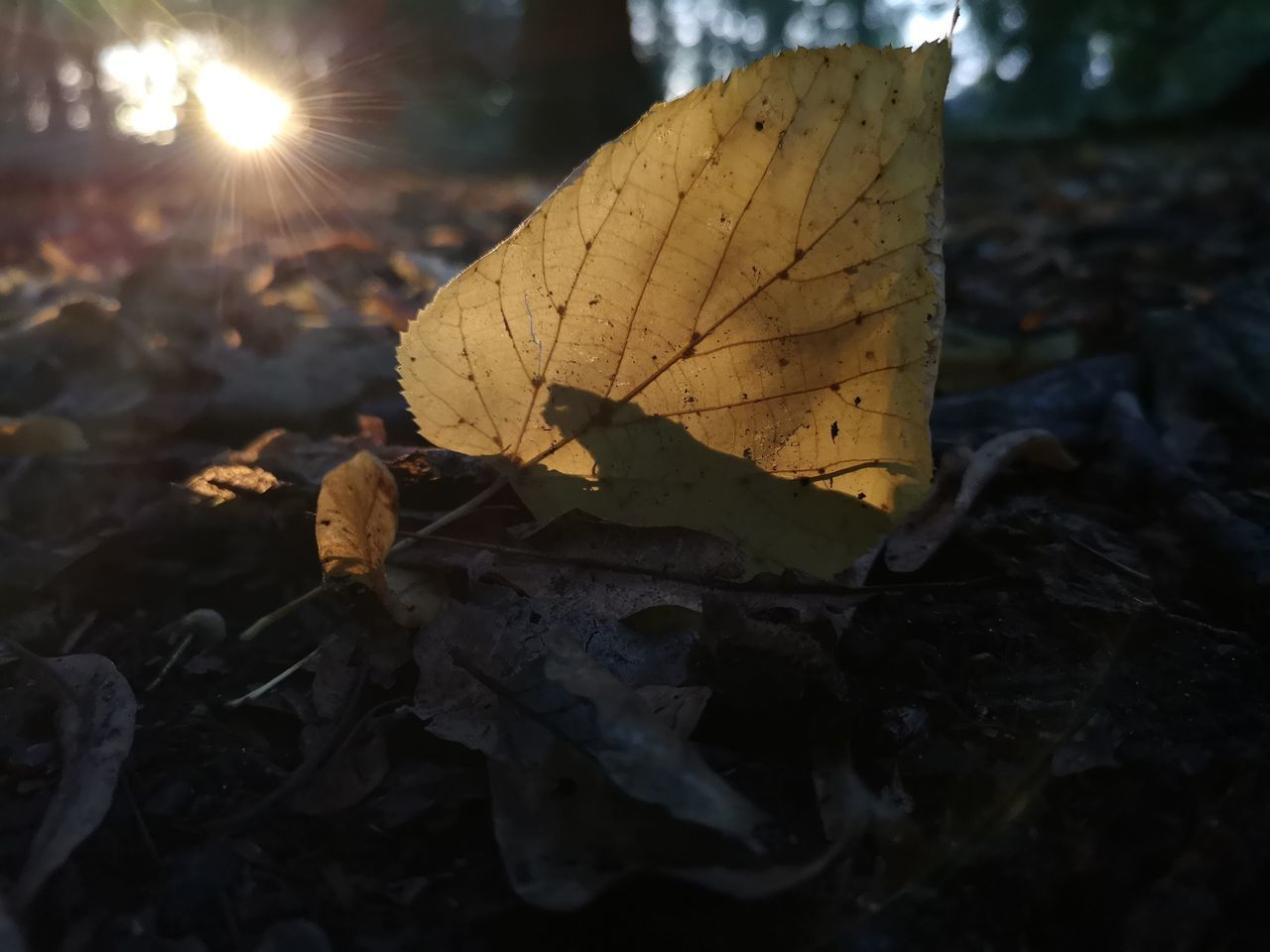 plant part, leaf, nature, close-up, autumn, dry, sunlight, beauty in nature, vulnerability, no people, land, fragility, plant, day, change, field, outdoors, falling, selective focus, leaves, lens flare, dried