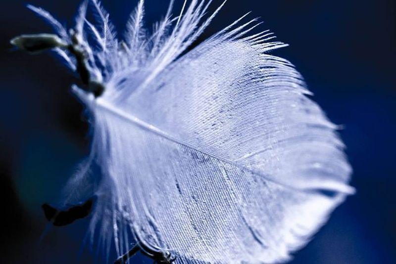 飄! 一根羽毛 乘著風兒 飄啊飄著 越飄越高 越飛越遠 飛上天空 就這樣沒有遲疑 風兒勇敢地把羽毛帶上青天 可以安心地在天空中 任意翻滾 自由轉身 風兒 流過彎彎山路 遊過斜斜深谷 溜過條條河川 滑過片片原野 白色羽毛讓風兒告別孤單 風兒也把羽毛帶出黑暗 他們永遠在彼此裏面 合而為一 飄向藍藍的天際 一起去旅行 落羽 飛羽 輕飄飄 輕聲 微距 隨拍 白色羽毛 風 飄 風中的羽毛