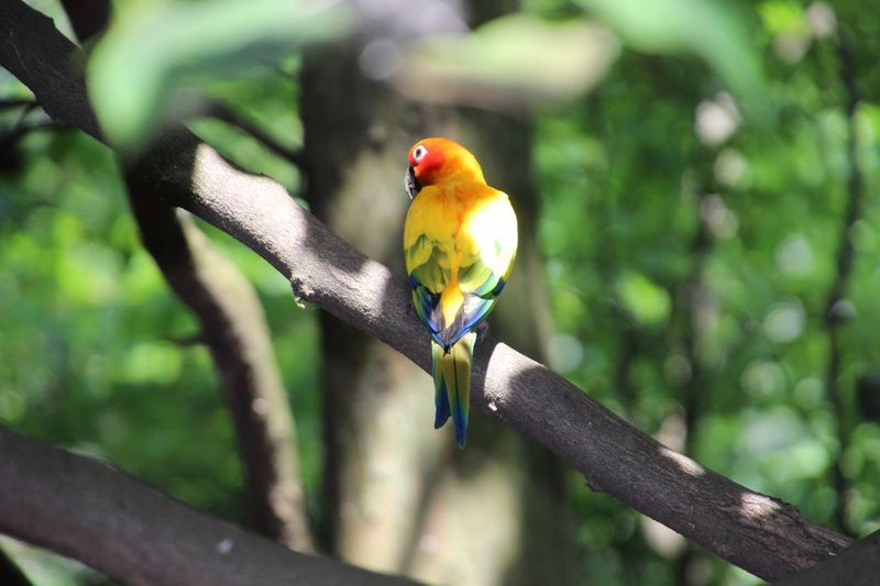 Animal Themes One Animal Bird Multi Colored Sitting On A Branch In A Tree Perching Focus On Foreground