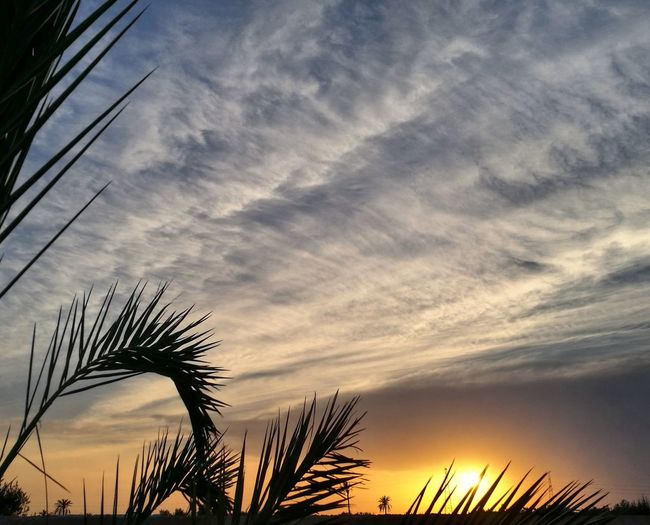 Cloud - Sky Tree Sunset Brizigou Nature Alone ManyColors EyeEm Best Shots EyeEm Selects Brizigou Asi_phptography
