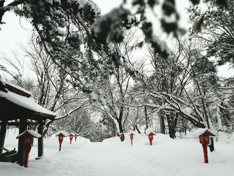 Winter Snow Cold Temperature Tree Nature Beauty In Nature No People Outdoors Day