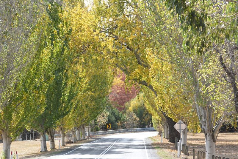 Tree Plant Growth Nature No People Green Color Sunlight Treelined Tranquil Scene Transportation Footpath Day Beauty In Nature The Way Forward Outdoors Road Tranquility Direction Shadow Park