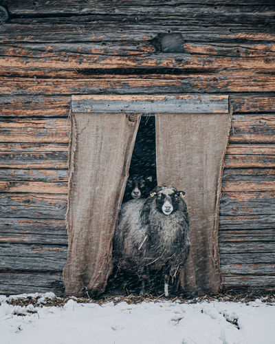 Cat standing on wood during winter